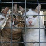 Зоозащитники построят в Боровичах «Кошкин дом»