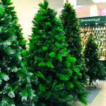 В Боровичах решили приобрести новогоднюю елку